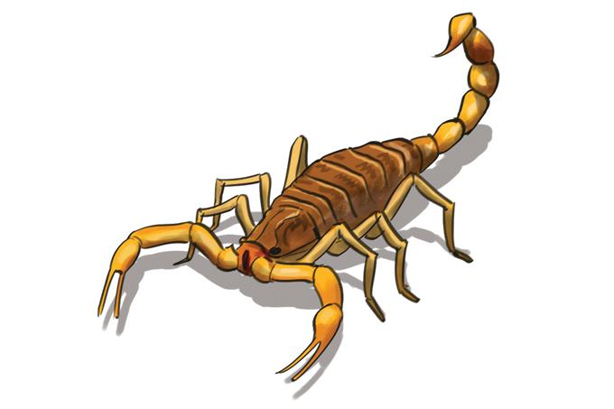 SP teve maior número de acidentes com escorpião em 30 anos. Como evitar?
